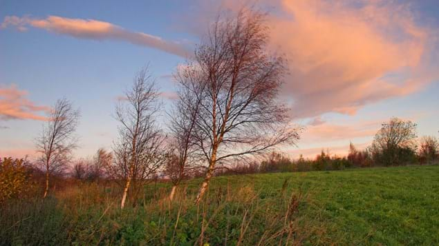 Young hedgerow at sunset at Hedley Hall
