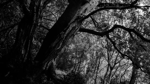 Dark, black and white photo of Whitmore Woods