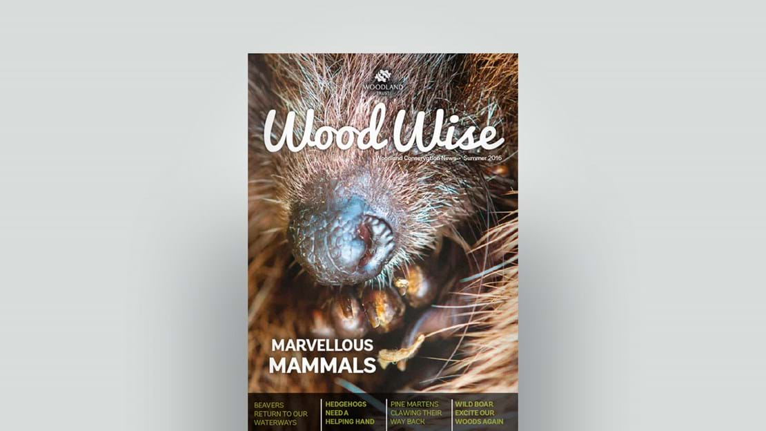 Cover of Wood Wise Summer 2016 - marvellous mammals