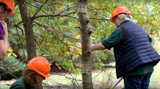 Three Sibsey Wood Volunteers wearing hardhats carrying out tree maintenance