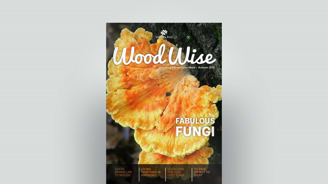Cover of Wood Wise Autumn 2015 - fabulous fungi