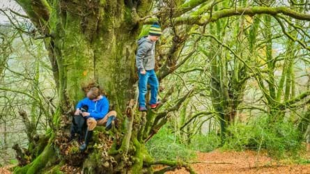 Two boys clambering over a huge tree