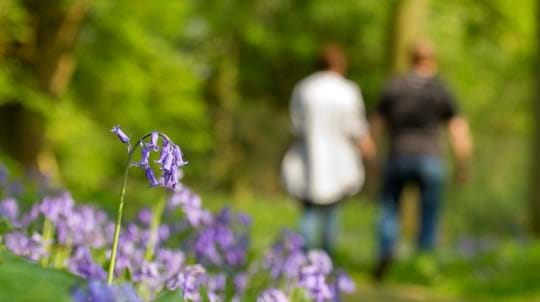 Couple walking in woodland with bluebells