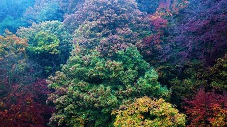 Colourful autumn tree canopy, Nidd Gorge