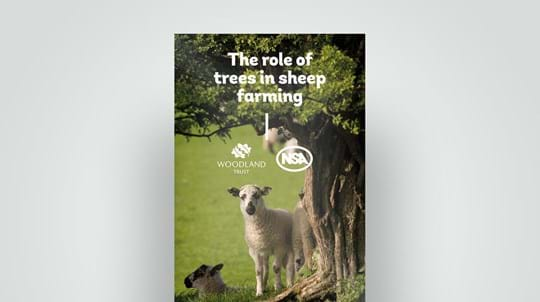 Role of trees in sheep farming leaflet, 2018