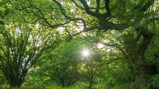 Sunflare through the woodland canopy in broadleaf woodland at Duncliffe Wood