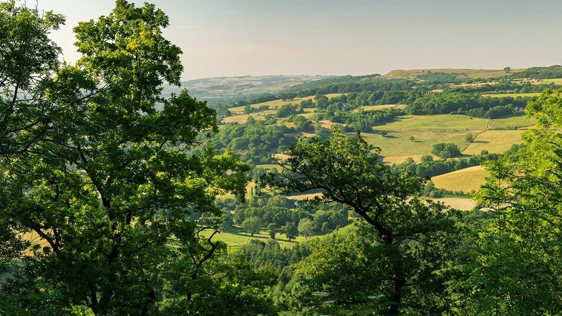 View over countryside from Lineover Wood