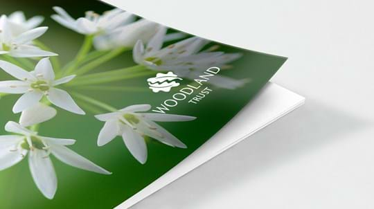 Document cover featuring ramsons