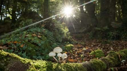 autumn woodland sunlit evening with fungi