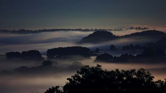 Tree tops breaking through a mist covering the landscape