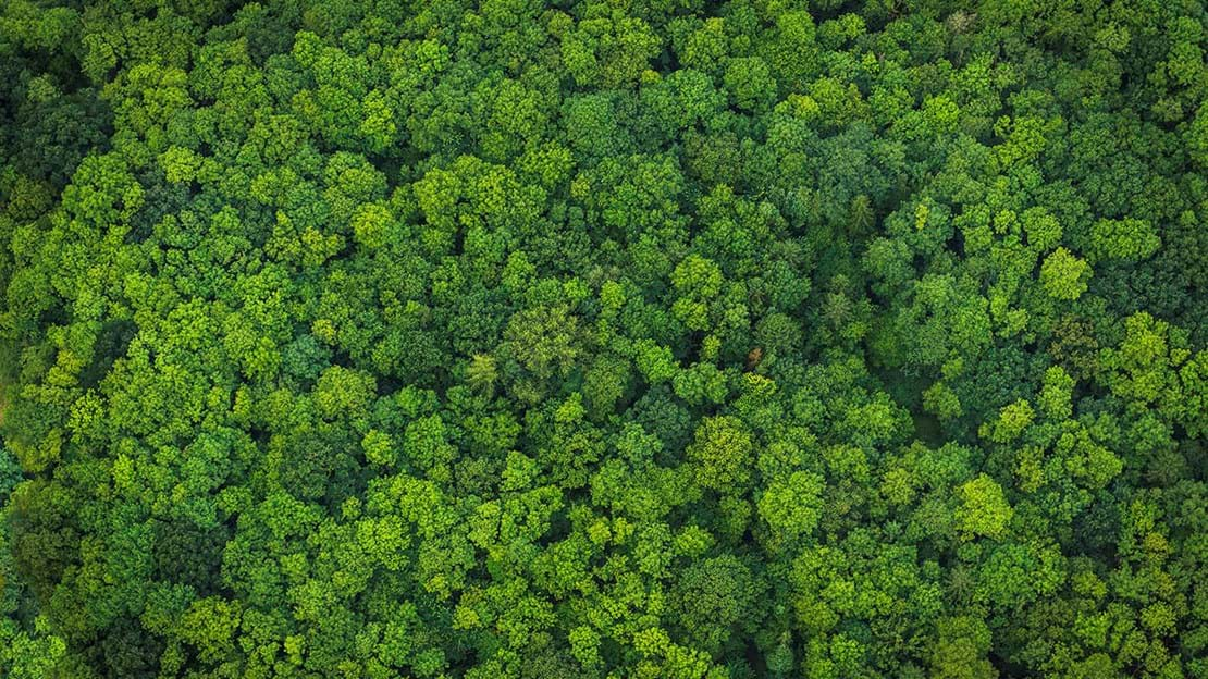 Aerial view of a forest of green treetops