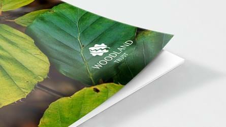Beech leaf document cover