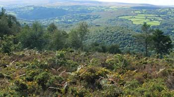 Landscape showing open heathland in the foreground and dense woodland in the background