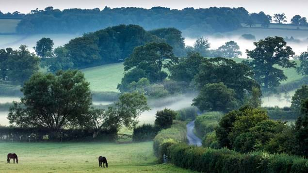 Misty morning hedgerows and woods in Somerset