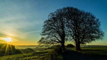 beech trees in the sunset silhouette