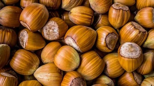 Acorns Edible And Other Acorn Facts