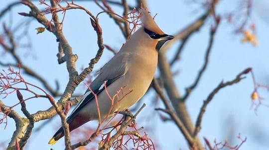 11 Rare Birds in Britain's Woodland - Woodland Trust