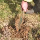 Small pile of soil on a grassy surface with a spade